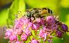 Fly on flower - Summer of 2012