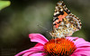 Butterfly on flower - Summer of 2012