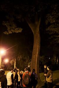 Ve stromě nad námi byli velice hlasití netopýři, jejichž (sociální, nikoliv echolokační) výkřiky byly bez problémů slyšet i bez detektorů.