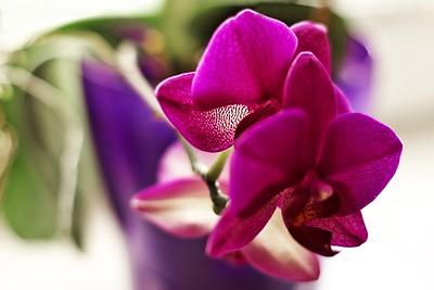 To ještě není ze zoo, to je jen orchidej u nás doma
