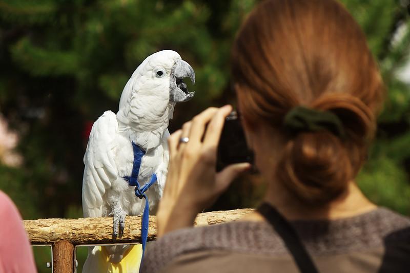 Papoušek Luigi