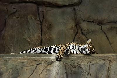 Jaguára jsme snad ještě nikdy neviděli jinak ;)