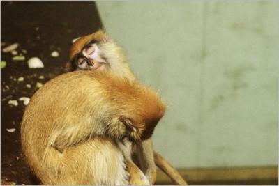 Opičí pohoda