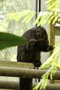 Tyhle opice se jihoafrickým pavilonem pohybují zcela volně. Jako ostatně řada jiných zvířat.