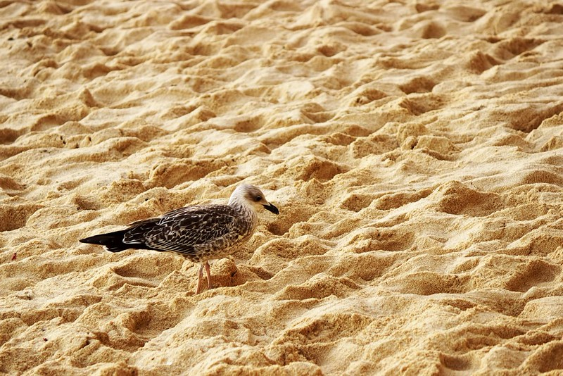 Majitel pláže