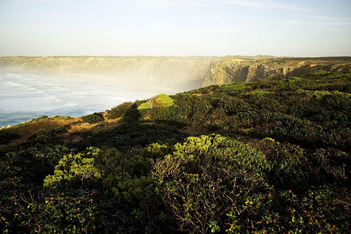 Na pobřeží klasicky všude rostou charakteristické sukulenty...