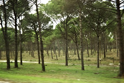 Tohle už nejsou řady korkových dubů, ale nějakých jiných stromů. Geotag je jen odhadnutý na základě času a vzdáleností od předchozího a následného pevného bodu, nemám tušení, kde přesně to bylo foceno.