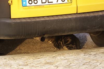 ...se vychytrale schovávala kočka.