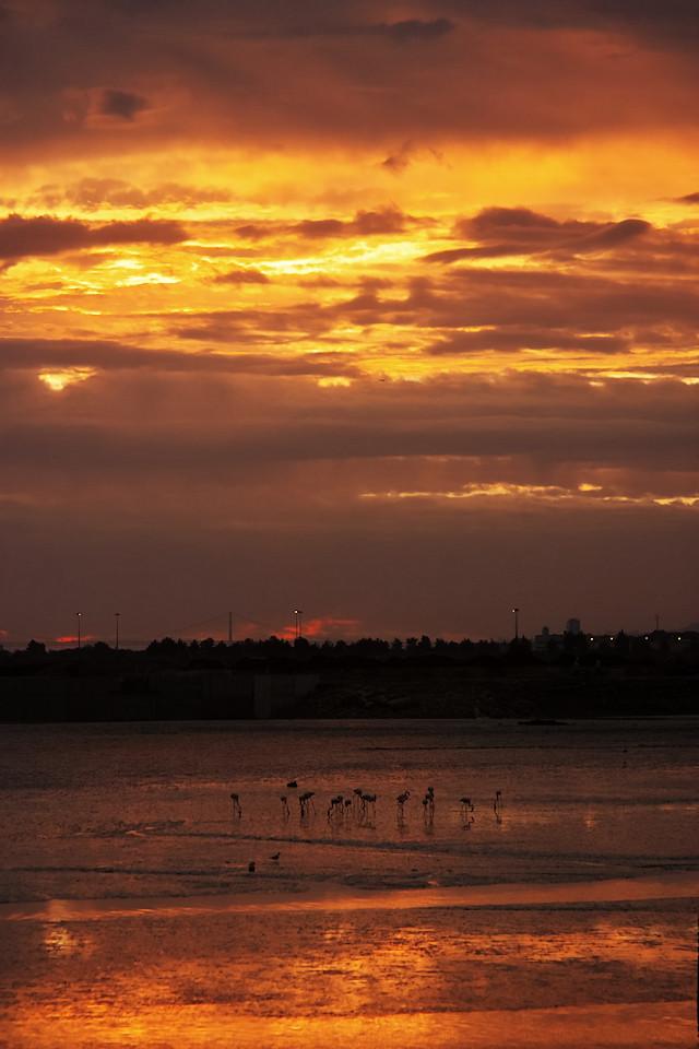 Je to takové hrozně neobvyklé - z nábřeží ve velmi městském prostředí fotíte plameňáky, procházející se v západu slunce