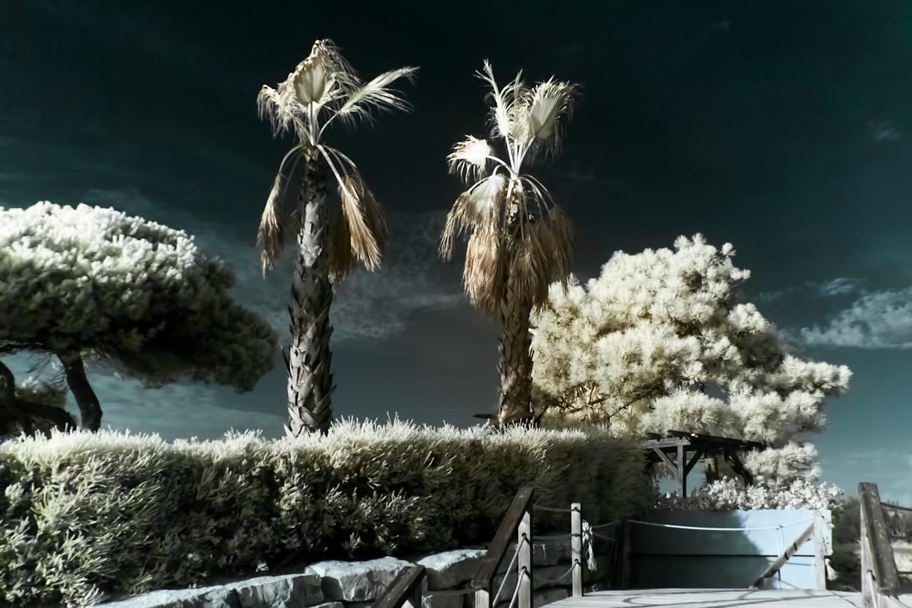 Infračervené palmy