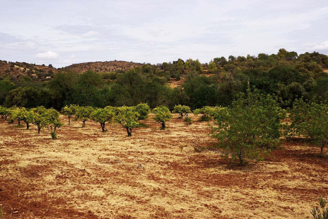 Bylo sice dost pod mrakem, takže cestou na východní cíp Algarve a Portugalska vůbec nebyly moc fotogenické podmínky, ale místní barevné kontrasty jsou úžasné i když je zamračeno. Tak alespoň jeden příklad.