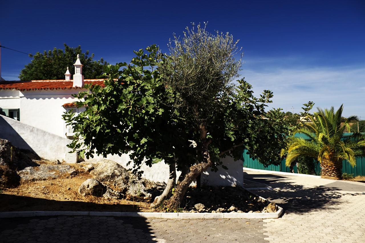 Ještě nějaké poslední letošní snímky z Quinta do Penedo