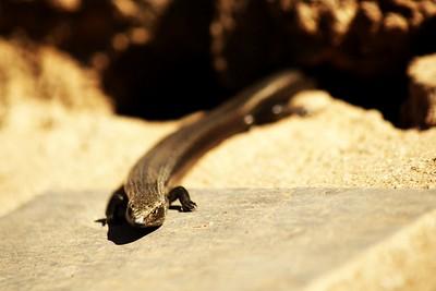 Ze zdi ještěrek