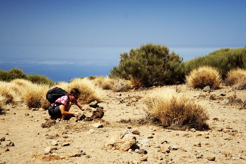 Hledání cache na Roque Corujado. Geocaching na Tenerife je velice svérázný - cache je obvykle ukryta na poměrně tradičních místech, tedy pod kameny nebo u nějakého keře. Problém je jaksi v tom, že volně loženými kameny a mezi nimi rostoucími keři je tvořen víceméně celý ostrov. Takže obvykle nezbývá než strávit dvacet minut hleáním toho správného kamene nebo keře (a někdy marně). Je to taková sázka do loterie: bude tenhle kámen tím správným?