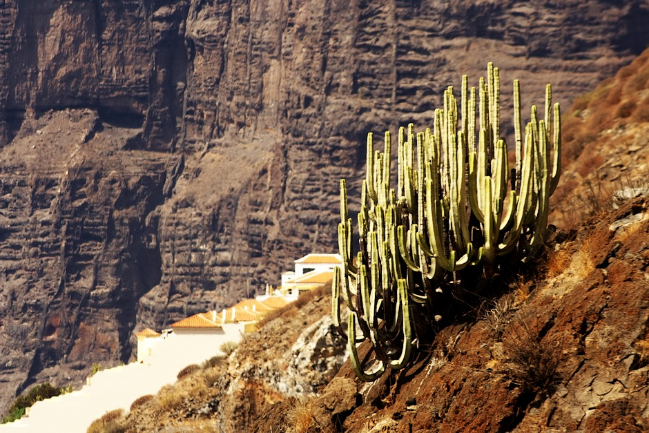 Los Gigantes a jakési místní kaktusy (nebo co to je)