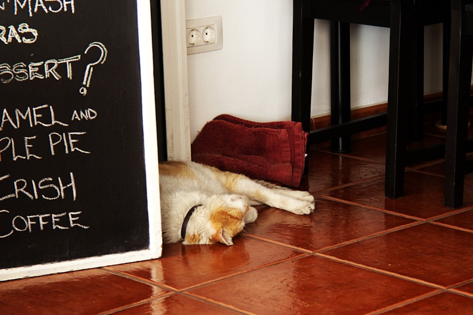 Spící kočka v restauraci Funky Chicken v přístavu Los Gigantes. To je tu poměrně obvyklý jev - zvířata (ať už kočky nebo psi) se obvykle schovávají někde ve stínu a spí.