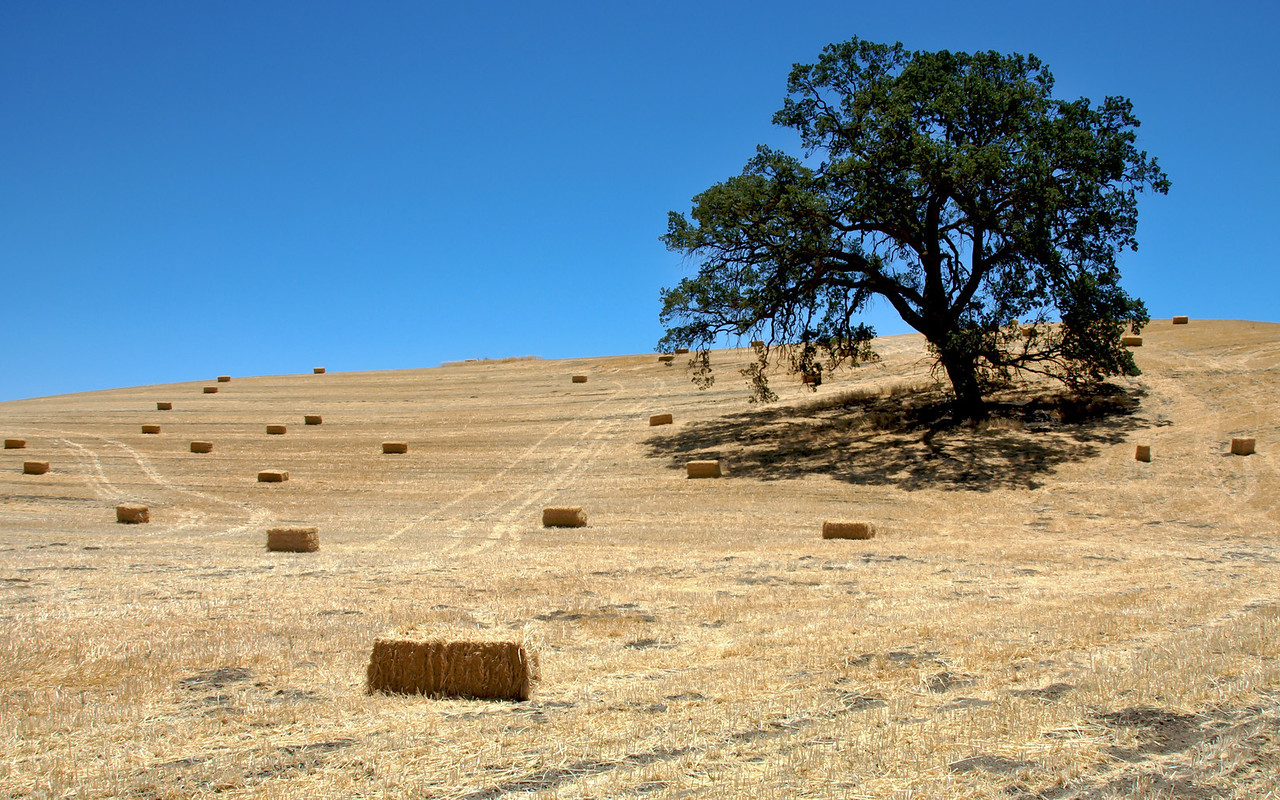 Central California farm field in fall, near Paso Robles, CA.