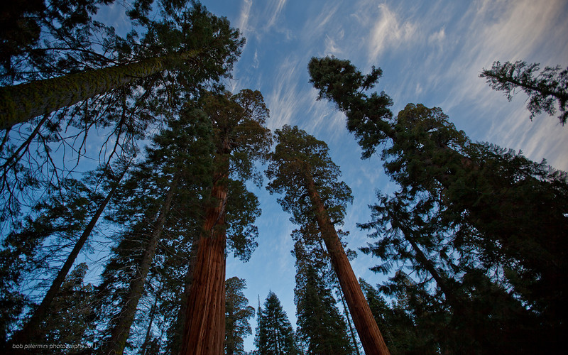 1920x1200 desktop wallpaper, free for you to use, Creative Commons 3 (Attribution-NonCommercial-ShareAlike). Sequoia National Park, California, 2011.
