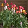 spring-7501