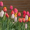 spring-7500