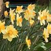 spring-7504