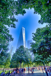 Looking back, through the tree tops,  at the Freedom Tower,  from the south reflection pool.  (HDR)