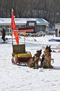 FIS Freestyle World Cup Moguls in Beida Lake, China Sled dogs Photo © Garth Hagar/U.S. Ski Team
