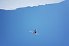 Jon Lillis<br /> 2012 Columbia Super Contintental Cup <br /> Freestyle Aerials at the Utah Olympic Park<br /> Friday, December 21, 2012<br /> Photo: Sarah Brunson/U.S. Ski Team