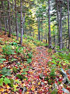 Nova Scotia: Cape Breton  Island Hike
