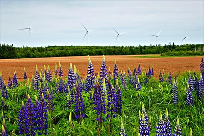 Canada: Prince Edward Island Walk