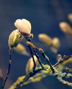 Poetic Springtime