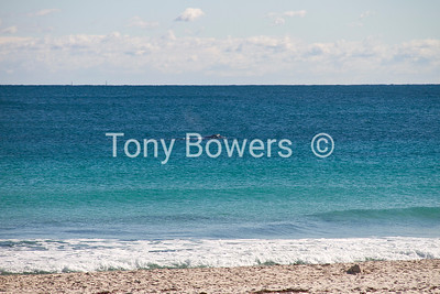 Southern right whale 45m off Leighton beach,Taken from the surf club. 8/7/2012