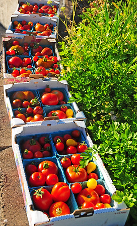 Hazel Heights:  Giving Garden Harvests