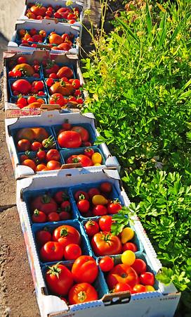 Hazel Heights:  Giving Garden Harvests
