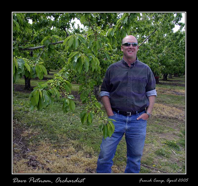 Dave Putnam, Orchardist and Owner.  Rainier Cherries in April 2005.