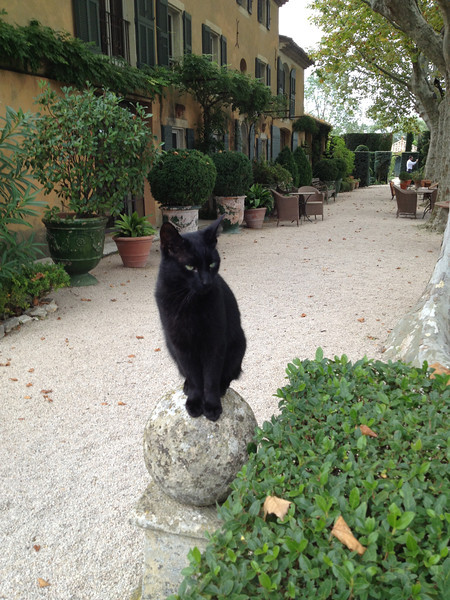 But there was a wonderfully friendly black cat to visit.