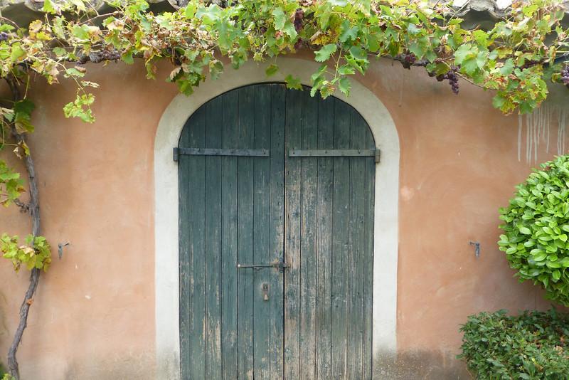 grape arbor garden