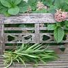 A pretty bench with hydrangea blossom