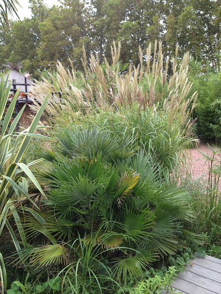 I could be at home right here surrounded by the ornamental grasses.