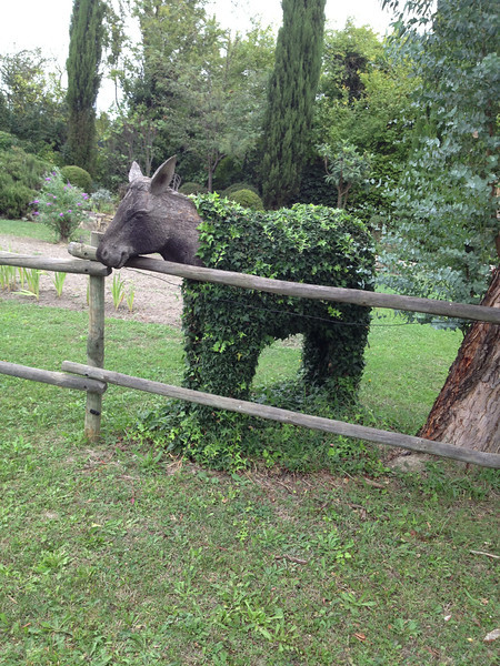 A cute topiary donkey