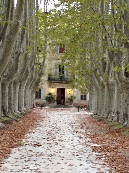 We marveled at the lovely plane tree path leading to the entrance of the Chateau.