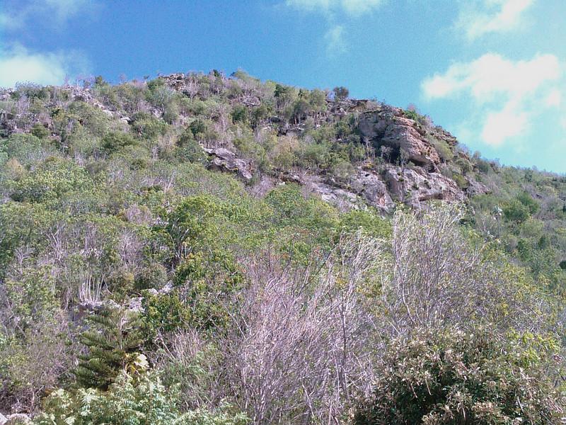 Saint Barth - Flora<br /> The highest point of St Barth: Morne de Vitet, 286m!