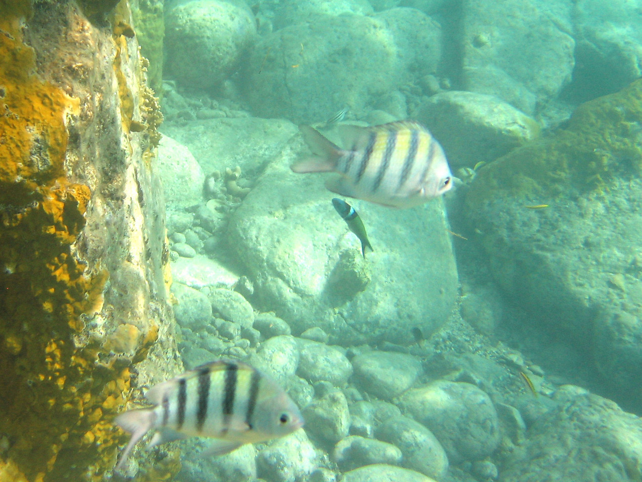 Saint Barth - Underwater In Colombier