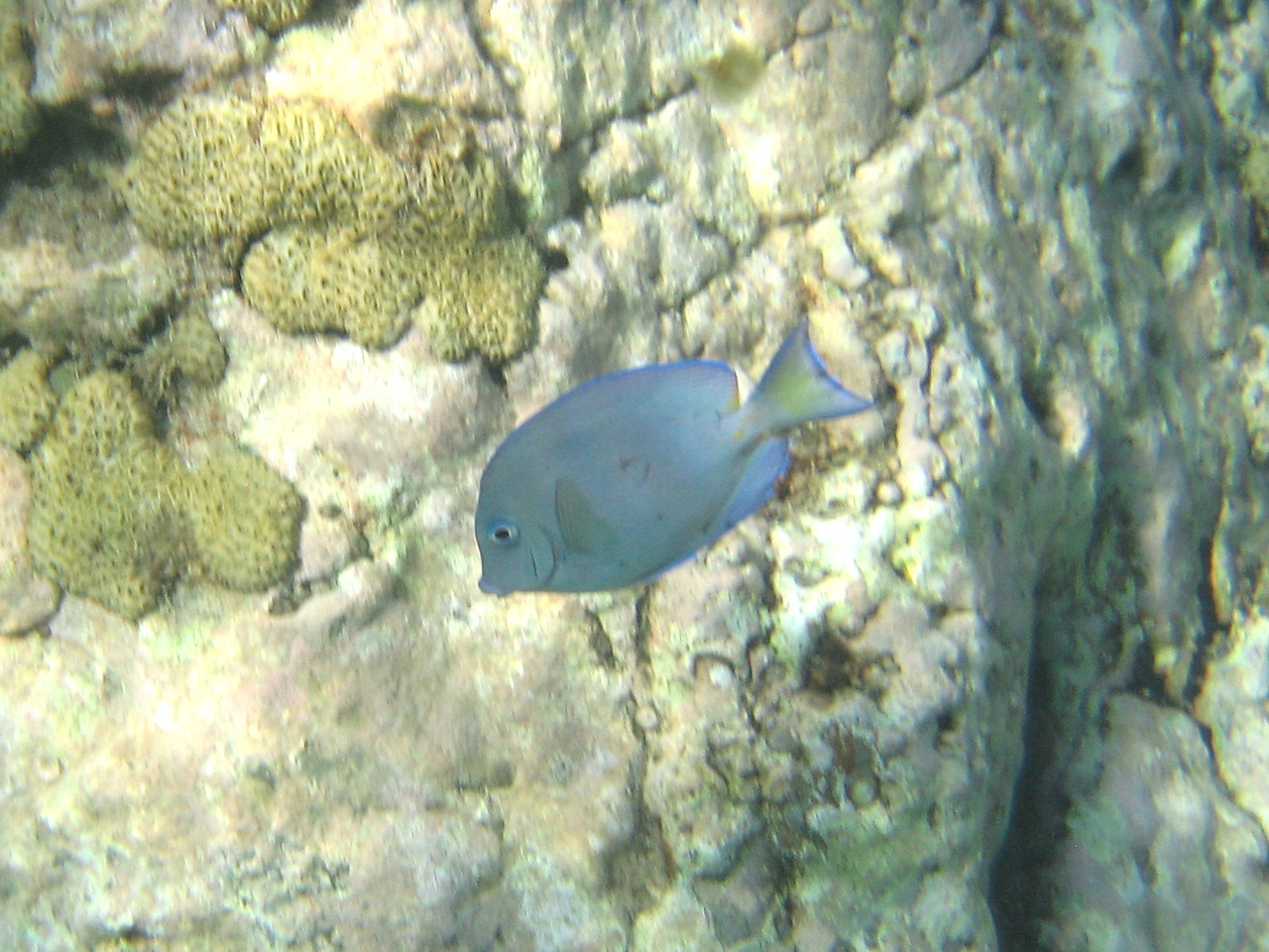 Saint Barth - Underwater In Colombier