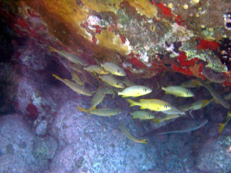 Saint Barth - Underwater<br /> Colombier