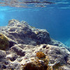 Saint Barth - Underwater<br /> Colombier