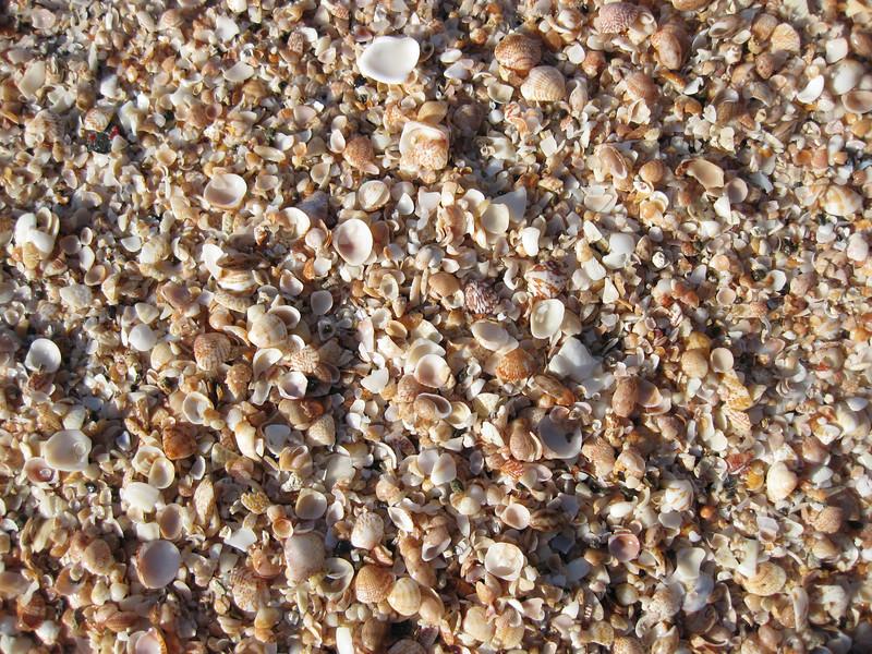 Saint Barth - Beach<br /> Shell beach