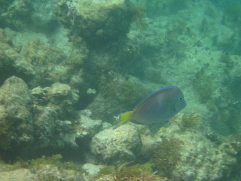 saint barth 2009 underwater