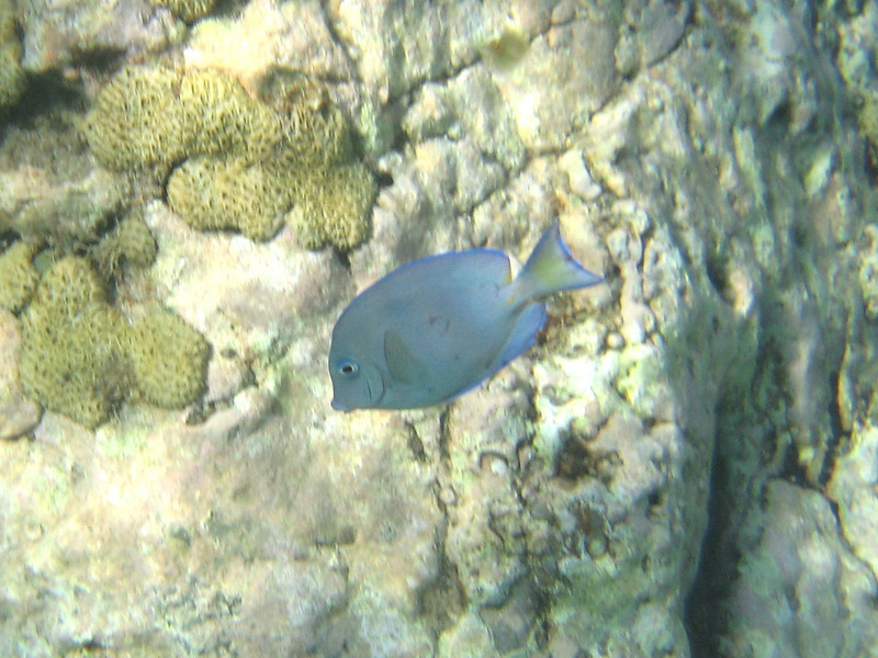 Saint Barth - Underwater<br /> In Colombier