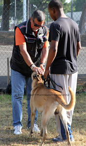 Judge, Dominique Piton, greets Raymond Williams & Blaze for the CSAU.  A multitude of temperment evaluation tests take place at the  SCABR French Ring trial in Long Beach, CA on July 13, 2012  © Erin Suggett Photography 2012 - All Rights Reserved